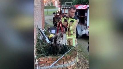Brandweer haalt geit uit waterput van 8 meter diep