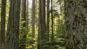 Bos als buffer tegen industrie