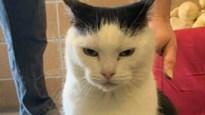 """Asiel wil vreselijke kat kwijt met zoekertje: """"Ze is gewoon een trut"""""""