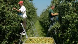 Langere seizoensarbeid moet fruittelers uit crisis helpen