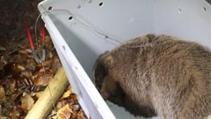 Das uit strop gehaald op kasteeldomein in Hoeselt: natuurinspectie start onderzoek
