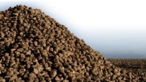 Gekelderde suikerprijs doet bietentelers naar adem happen