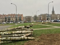 Zieke bomen op Molenweideplein worden vervangen