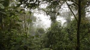 Vrouw en kinderen na meer dan een maand teruggevonden in Amazonewoud