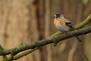 Vogels observeren (COLUMN)