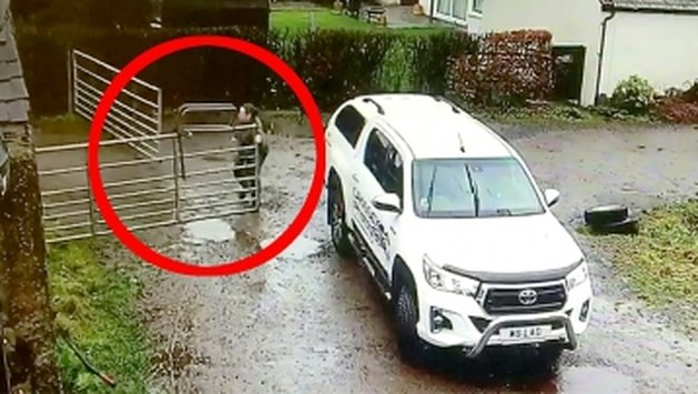 Hilarisch: vrouw probeert poort te sluiten maar daar steekt wind een stokje voor