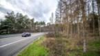 Bomen moeten verdwijnen door letterzetter, maar 'Essersbos' niet bedreigd