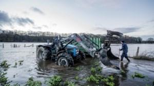 Verzekeraars vergoeden schade boer… maar enkel bij zondvloed of Siberische kou