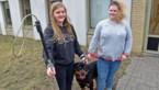 Dierenasielen zoeken hondenvangers: