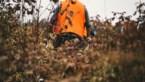 31 everzwijnen geschoten bij drukjacht in Bilzen