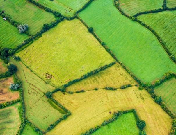 Stormloop in Wallonië op subsidies voor hagen