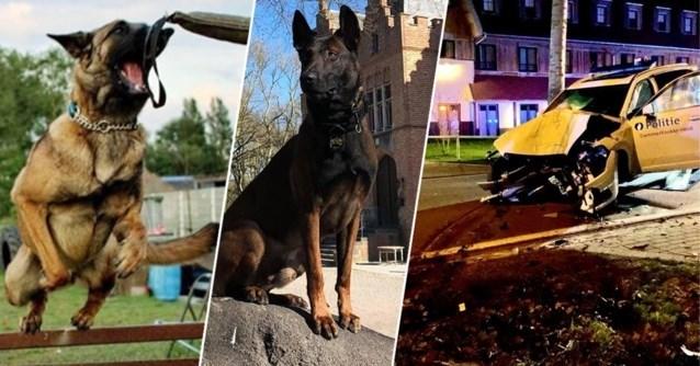 Verongelukte politiehonden krijgen rouwregister