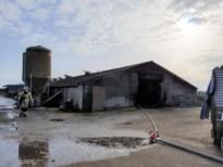 Tractor vliegt in brand in stalling, twee kalveren komen om