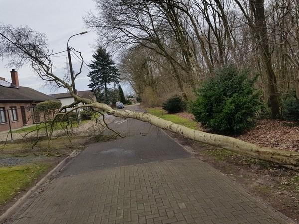 LIVE. Ciara veroorzaakt heel wat schade in Limburg