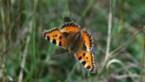 Twee voor twaalf voor veel insectensoorten: maak van je tuin een tankstation van nectar