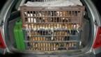 Europees Parlement wil illegale hondenfokkerijen hard aanpakken