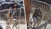 """Jogger klimt noodgedwongen op hek om te ontsnappen aan agressieve hond: """"Kon veel erger aflopen"""""""