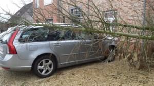 Weggewaaide dakpannen of een omgevallen boom? Zo krijg je je schade terugbetaald