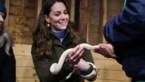 """Kate Middleton openhartig over mama zijn: """"Wie zegt nooit te twijfelen, liegt"""""""