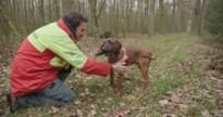 Nazoekteam wil toegang tot alle gebieden om gewond wild op te sporen