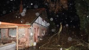 Bewoners en ruim tien honden ontsnappen nipt als boom knakt