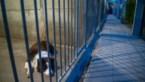 Dertig nieuwe dierenasielen in 2019, twintig vergunningen geschrapt