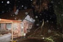Bewoners en ruim tien honden ontsnappen nipt wanneer boom knakt door storm Dennis