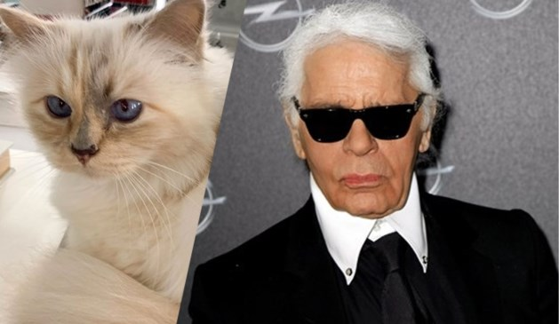 Hoe zou het nog zijn met Choupette, de kat van wijlen Karl Lagerfeld?