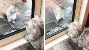 Geobsedeerde kat kijkt drie uur lang naar uitdagende eekhoorn