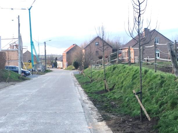 Laanbomen gekapt en vervangen in de Bonderstraat in Lafelt