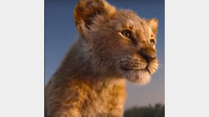 De Lion King: film en workshops