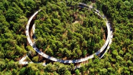 Fietsen door de <B>toppen </B><B>van de bomen in Bosland</B>