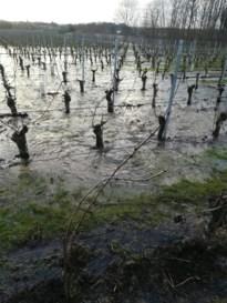 Waterlek bij het Grootbos in Genoelselderen