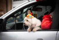 Bekijk hier de foto's van de carnavalsstoet in Sint-Truiden