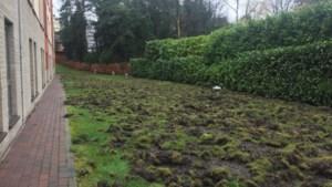 Everzwijnen woelen 800 m² tuin om in Genk: