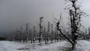Sneeuw trekt over Limburg: code geel voor gladheid van kracht