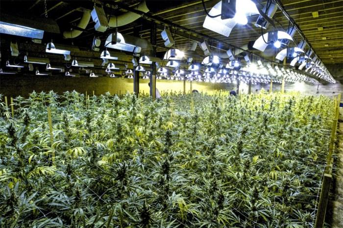 Tinder levert Peltse een lief en een cannabisplantage op