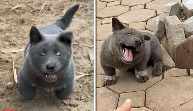 Het beste van twee werelden: de puppy die eruitziet als een kat