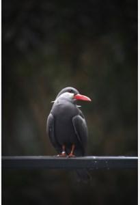 Ontsnapte incastern uit zoo Planckendael duikt op in Maasmechelse bedrijfshal