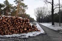 7.700 bomen gekapt in Kattenbos