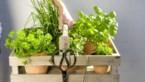 FACT CHECK. Helpen geneeskrachtige planten tegen de ziekte van Lyme?