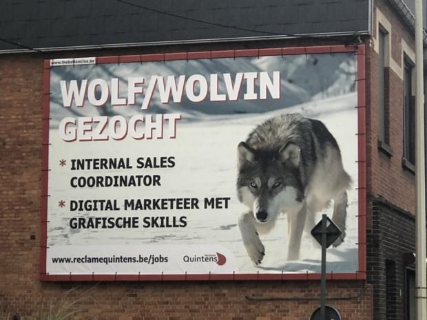 Kamps reclamebureau zoekt wolf/wolvin