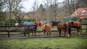 VZOC vangt recordaantal paarden op: zeven merries zijn hoogdrachtig