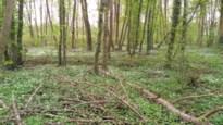 COLUMN: Zonnepaneeltjes in het bos