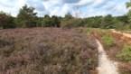 FIETSEN. Van schachtbokken naar glooiende heide in Midden-Limburg