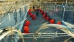 Taliban verwerpen aanbod gevangenenruil met Afghaanse overheid