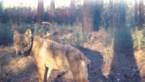 Op zoek naar de daders: aflevering 2 van 'In de ban van de wolf' vanaf vandaag online
