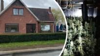 Cannabisplantage van 1.400 planten ontdekt in huis, twee arrestaties
