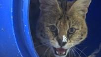 Medewerkers Natuurhulpcentrum vangen thuis jonge diertjes op