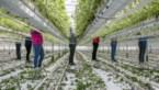 Boerenbond vraagt tijdelijk werklozen om te komen helpen in de fruitsector